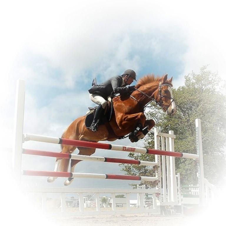 Наездник на коне берет барьер