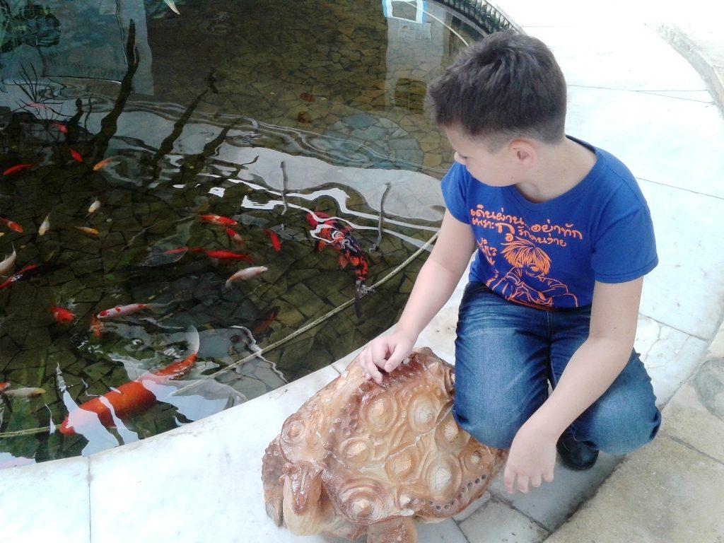 Ребенок наблюдает за разноцветными рыбками в пруду Дворца Пионеров на Воробьёвых горах.