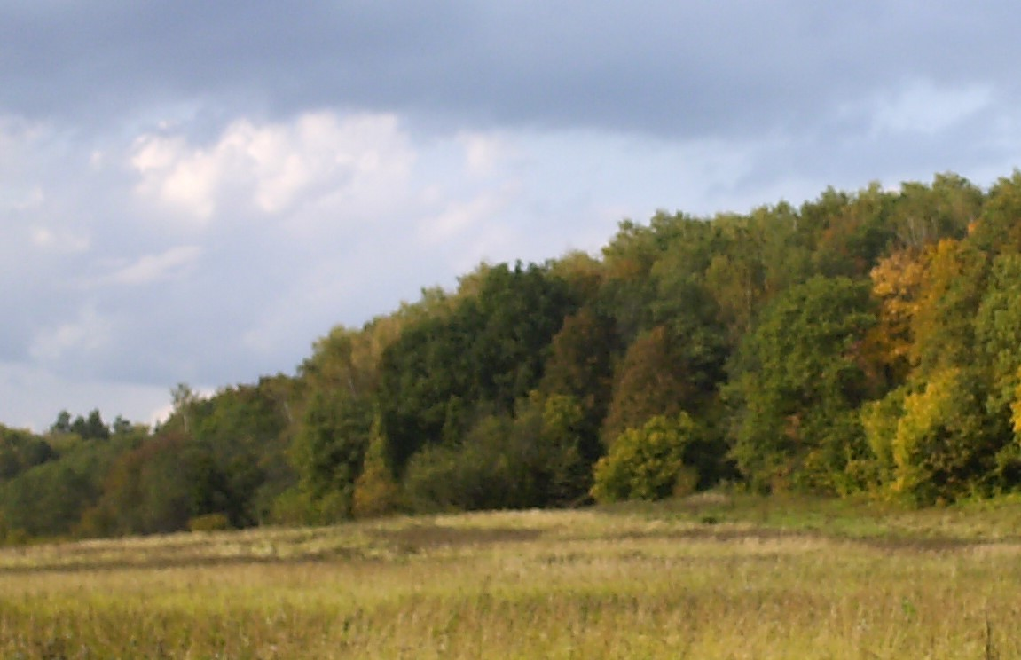 луг, лес и небо